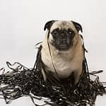 bigstock-Pug-in-a-pile-of-data-tape-7002683